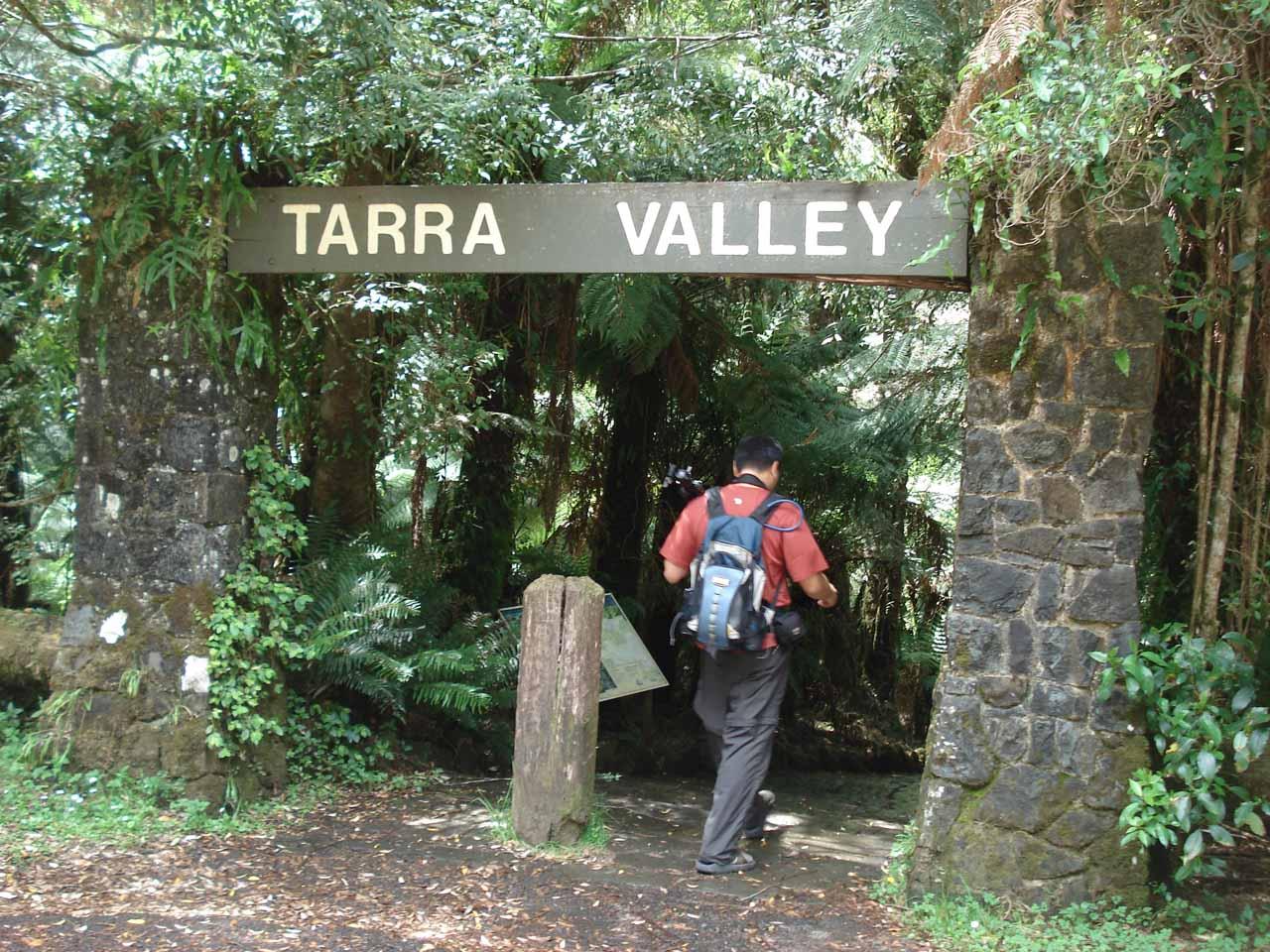 Starting the walk for Cyathea Falls