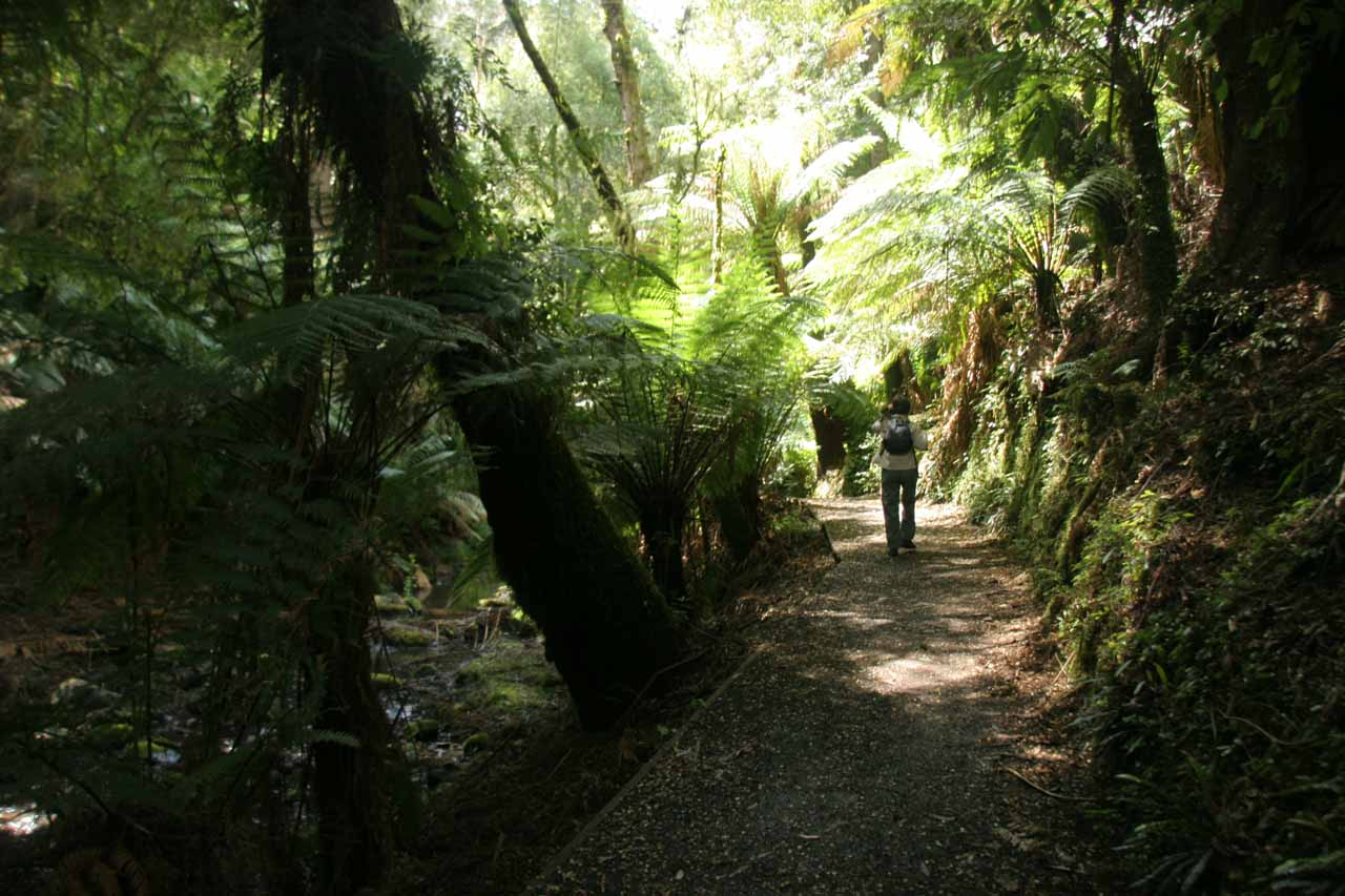Julie on the Cyathea Falls Trail flanked by lots of ferns