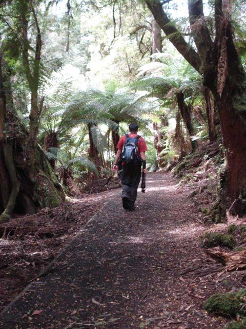 Cyathea_Falls_016_jx_11112006 - Me on the rainforest trail to Cyathea Falls