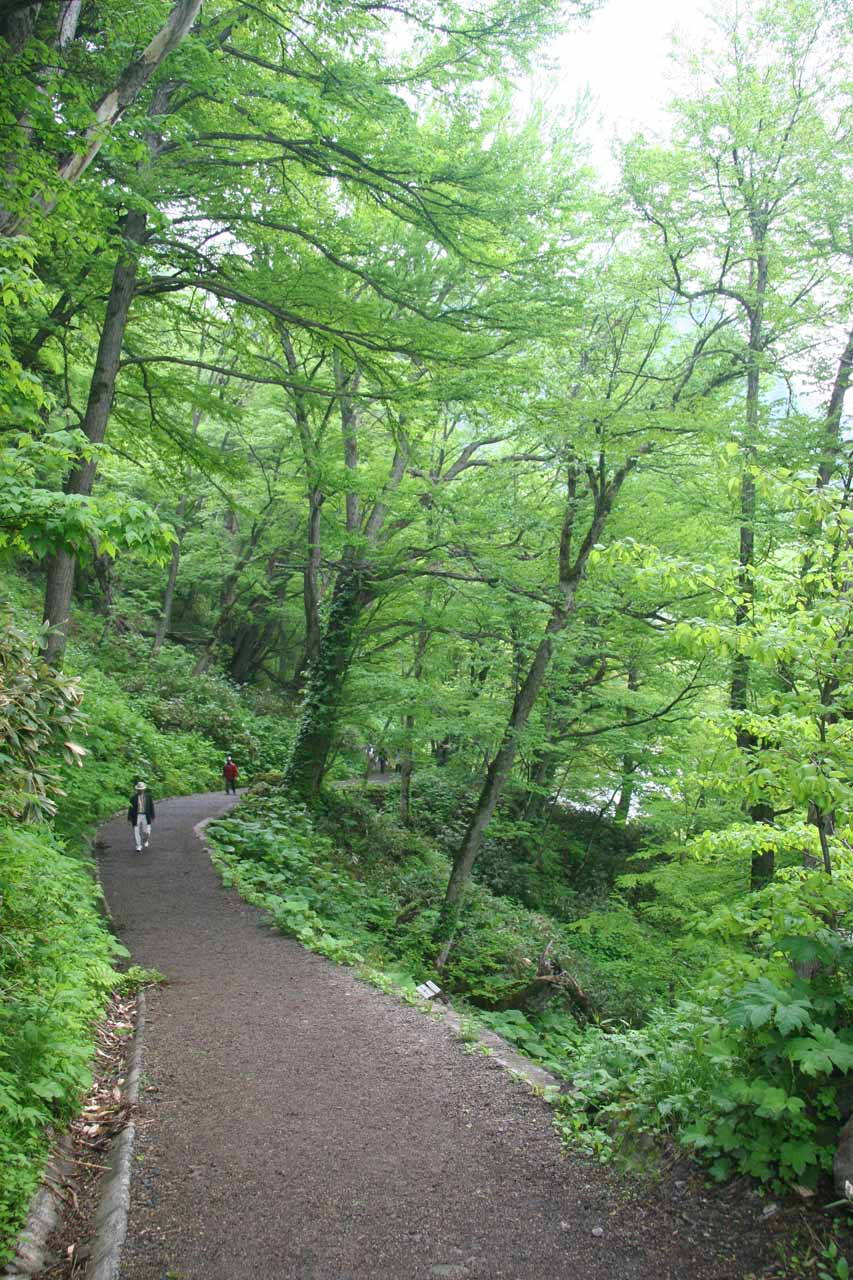 The forested and flat trail leading to the Angel's Robe Waterfall