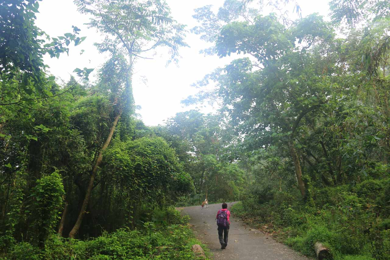 Initially, the Dajin Falls Trail meandered gently uphill on a concrete path flanked by fern-draped foliage and bamboo stalks