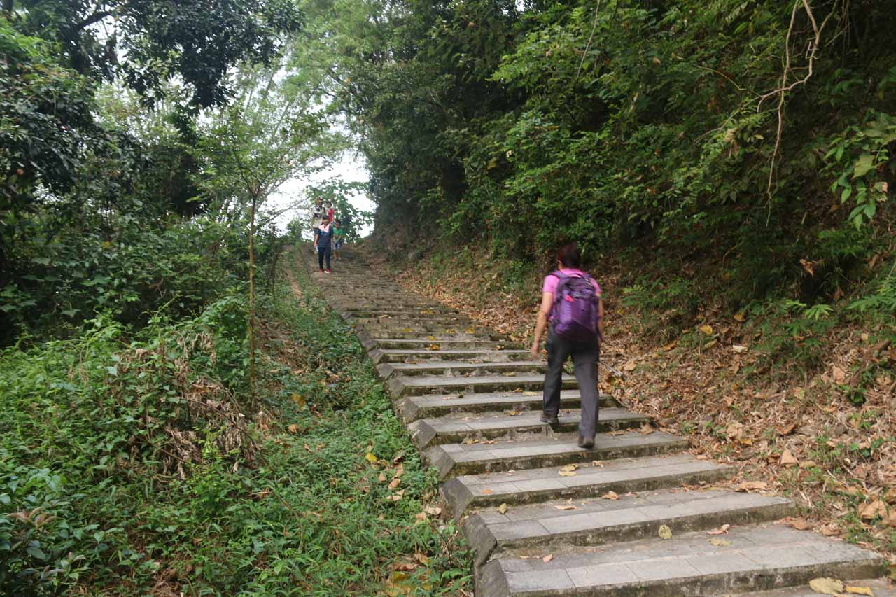 Then the trail ascended in earnest going up several steps like this