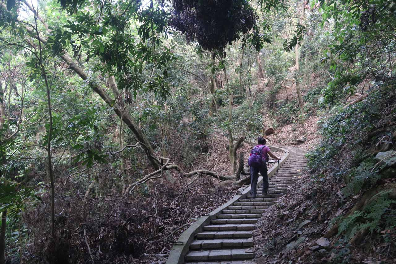 After having our fill of the Dajin Falls, we had to head back up before going back down to the car park