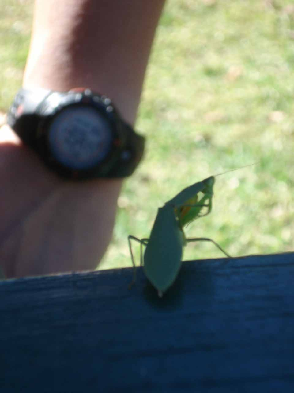 The leafy mantis that essentially led to this camera's demise