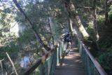 Dangar_Falls_034_05062008 - Julie on an elevated walkway approaching the base of Dangar Falls