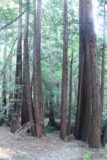Dawn_Falls_008_05222016 - Walking amongst the giant coastal redwood trees in Baltimore Canyon during our May 2016 pursuit of Dawn Falls