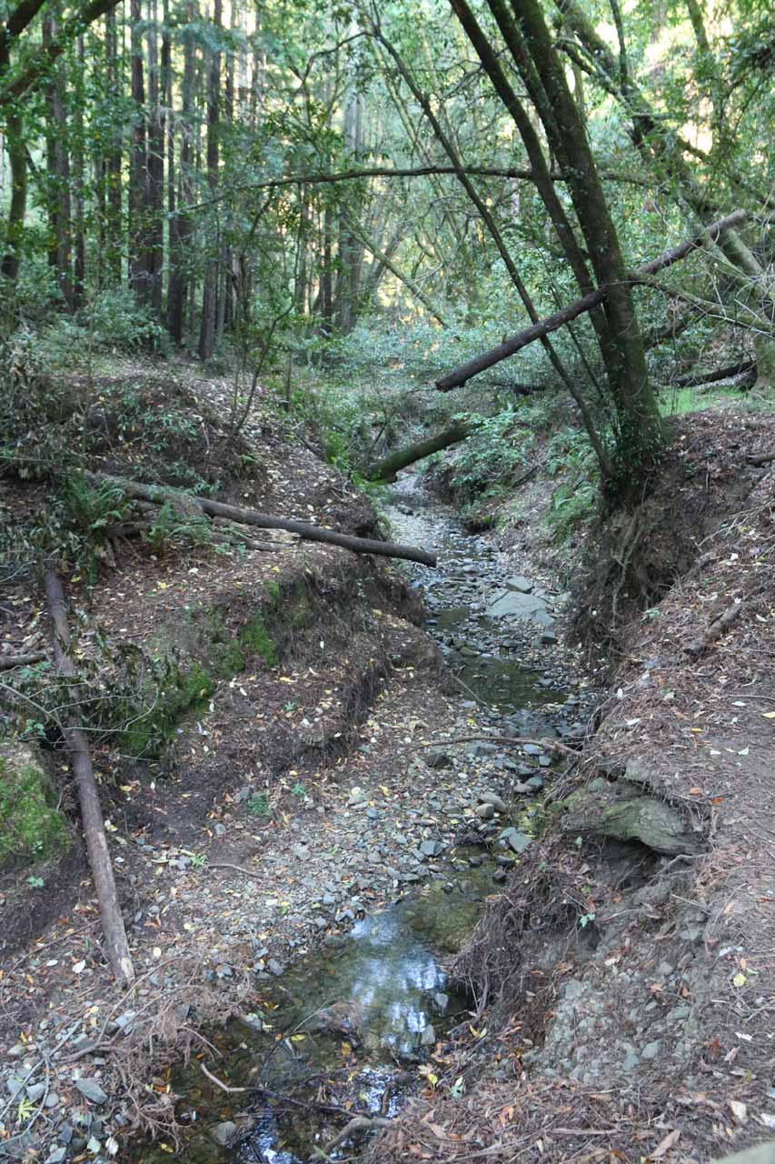 As you can see from this photo, there was actually water in Larkspur Creek, which gave us hope that Dawn Falls ought to be flowing