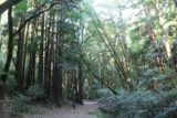 Dawn_Falls_017_05222016 - Baltimore Canyon was full of imposing coastal redwood trees