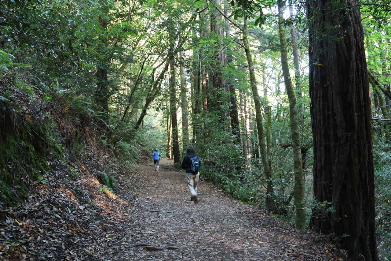 We shared this trail with quite a few local joggers and trail runners out for their early morning weekend exercise