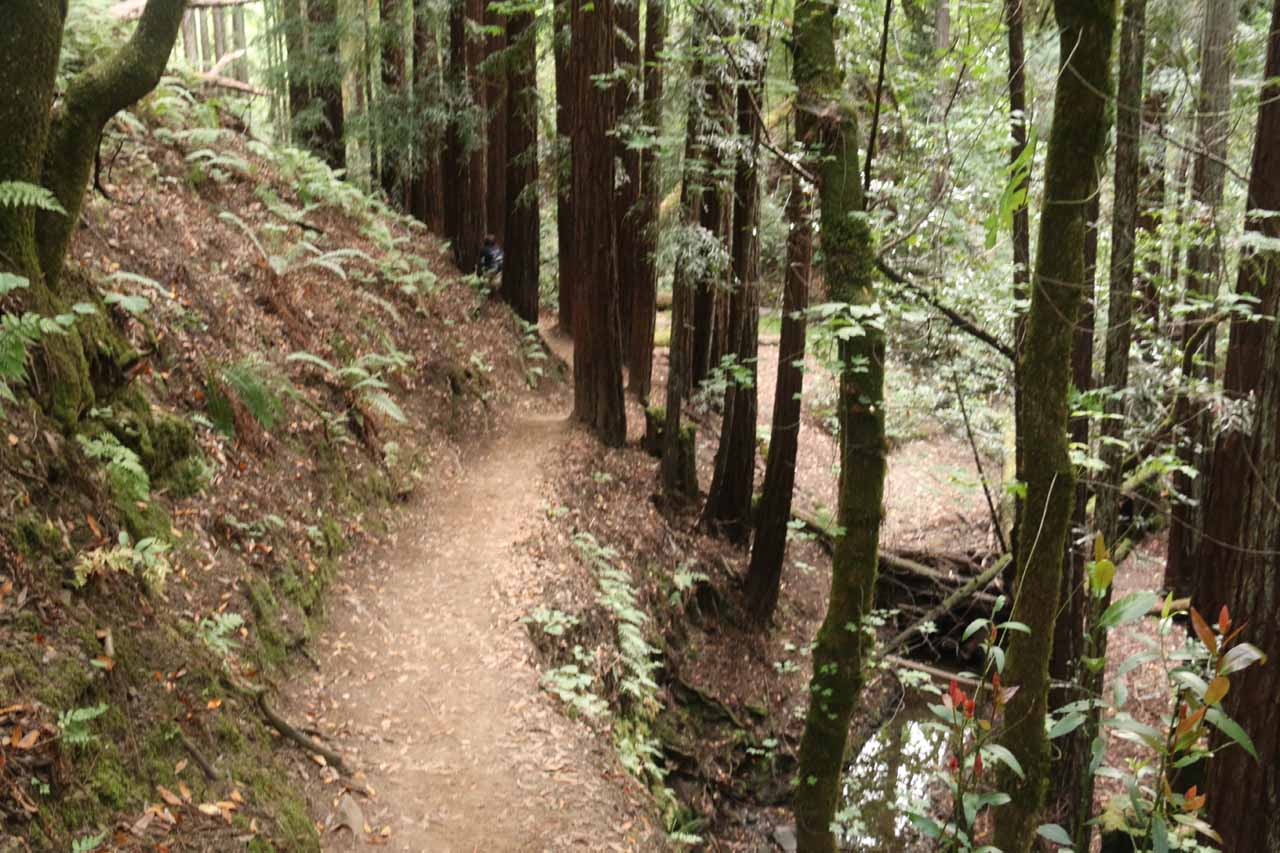 This was one of the few narrow sections of the Dawn Falls trail