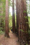 Dawn_Falls_047_05222016 - Mom hiking between imposing coastal redwood trees