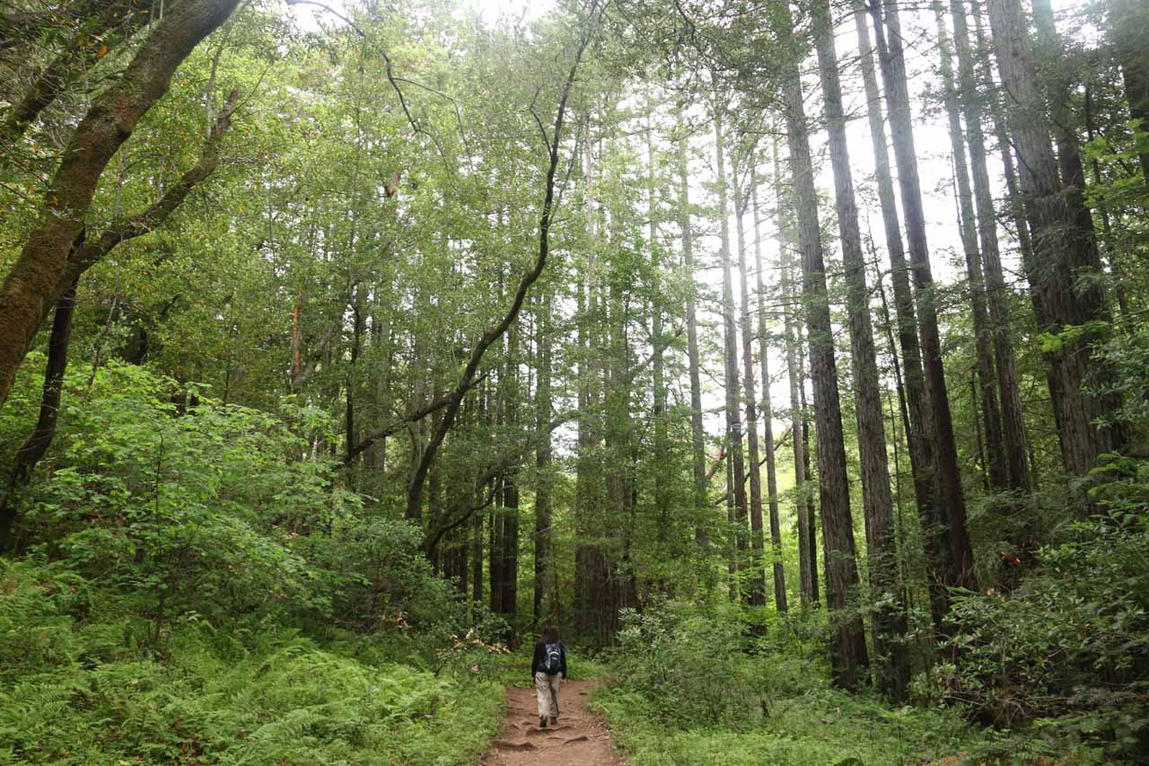 This was a particularly dense part of the forested Baltimore Canyon