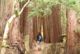 Dawn_Falls_060_05222016 - Mom going between even more coastal redwood trees in Baltimore Canyon