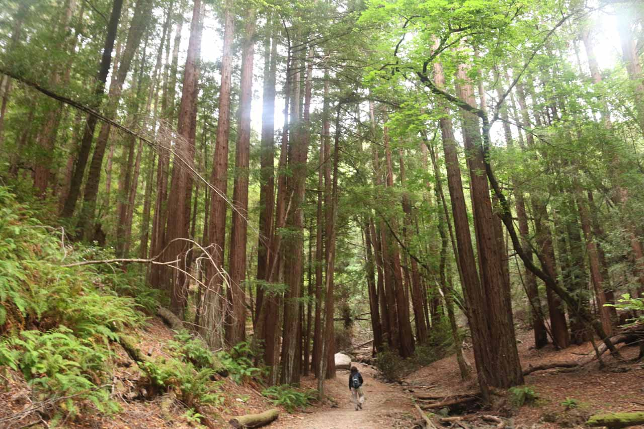 As Baltimore Canyon started to narrow, we went through this pretty dense grove of giant coastal redwoods