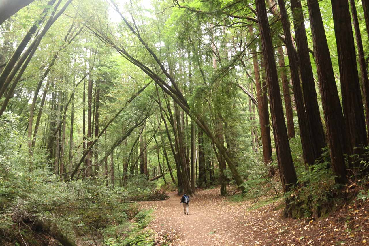 Getting to experience Baltimore Canyon and the coastal redwood trees all over again as we returned the way we came