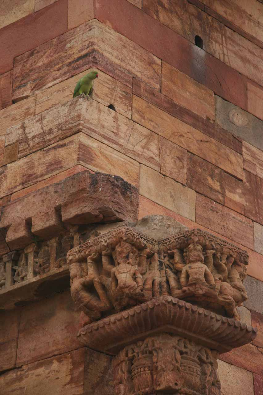 Zoomed in on some carvings atop some of the pillars around the Qutb Minar