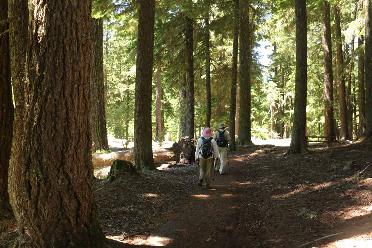 Following a short but well-shaded forested path leading to the long footbridge over Salt Creek