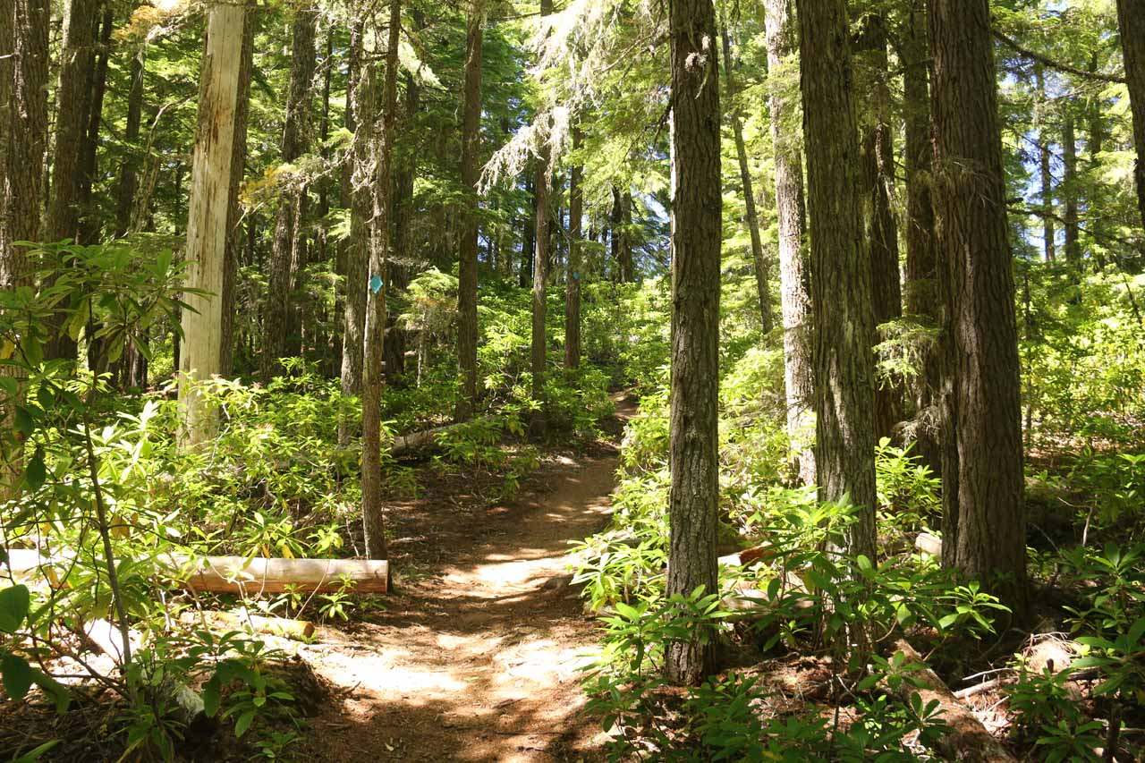 The trail then dropped back into the shade of the forest