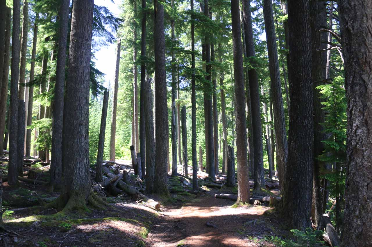 The Diamond Creek Loop Trail continued meandering through tall trees providing adequate forest cover from the hot early afternoon sun