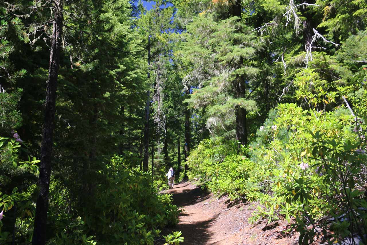 The trail then pretty much alternated between well-forested open regions like this or well-shaded forested groves up ahead