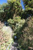 Doi_Inthanon_023_12292008 - A sunny part of the Ang-ka Nature Trail