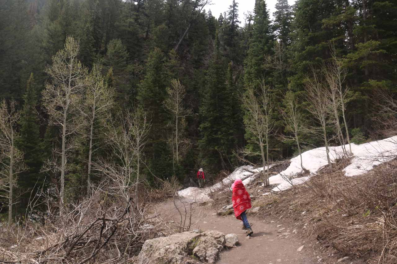 The Donut Falls Trail returned to the tree cover as the trail was converging onto the Mill D South Fork Creek