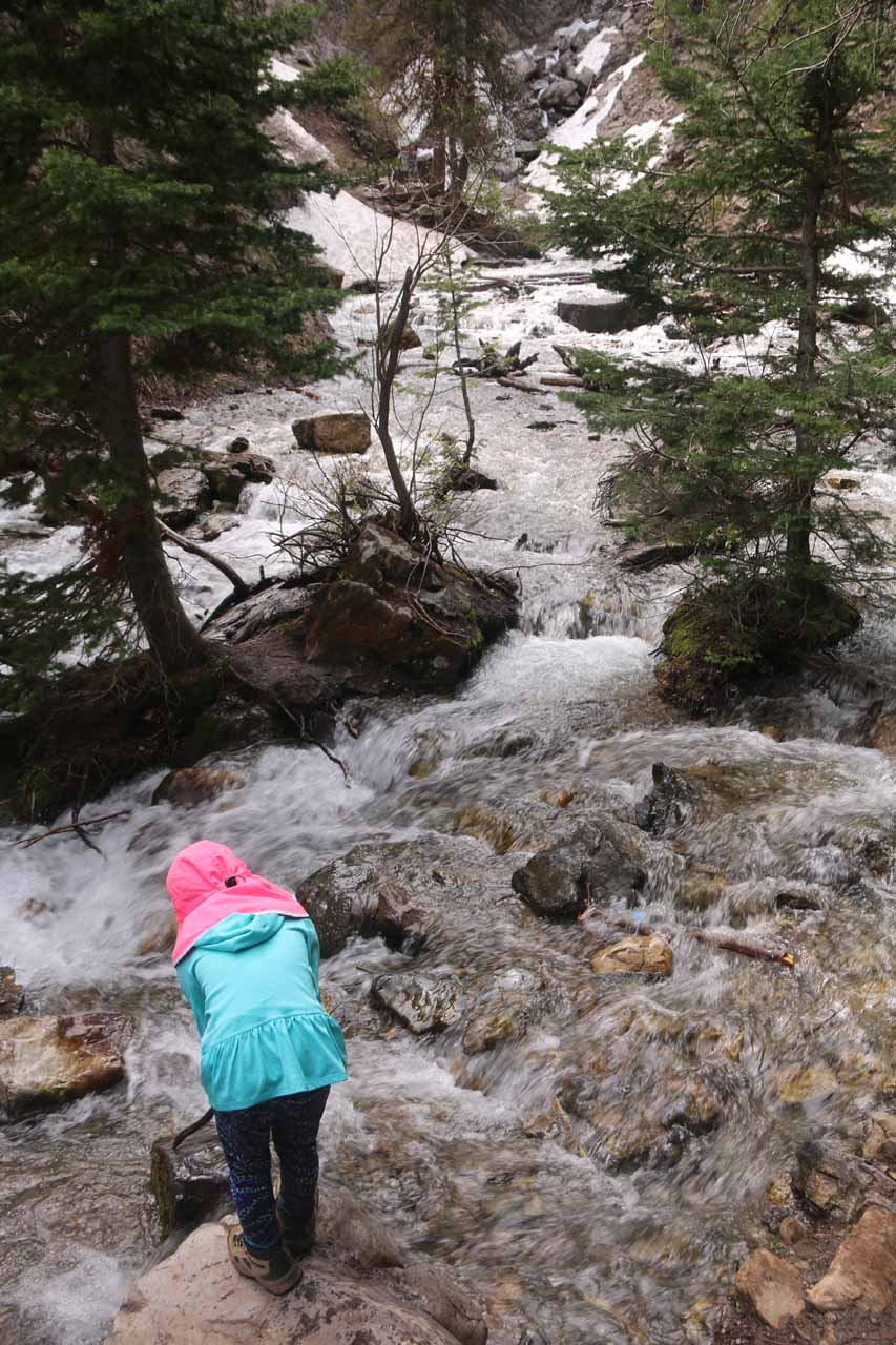 This was the official end of the trail. Further progress required crossing the frigidly cold Mill D South Fork