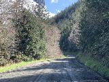 Drift_Creek_Falls_001_iPhone_04082021 - Traversing an unpaved part of Bear Creek Road en route to the Drift Creek Falls Trailhead