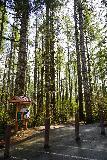 Drift_Creek_Falls_007_04082021 - Signage at the Drift Creek Falls Trailhead