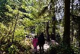 Drift_Creek_Falls_045_04082021 - Julie and Tahia approaching the fairly busy Drift Creek Suspension Bridge