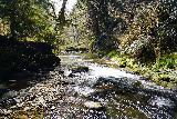 Drift_Creek_Falls_116_04082021 - Looking downstream along Drift Creek away from the Drift Creek Falls