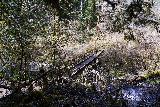 Drift_Creek_Falls_139_04082021 - Going back across a bridge over Horner Creek (I think) on the return hike