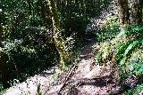 Drift_Creek_Falls_162_04082021 - Descending to the direct trail back to the Drift Creek Falls Trailhead