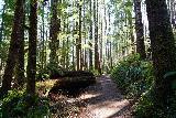 Drift_Creek_Falls_164_04082021 - Continuing up the Drift Creek Falls Trail as I headed back to the trailhead