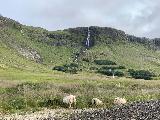 Drive_to_Bjarnafoss_032_iPhone_08182021 - Sheep grazing before the Bjarnarfoss Waterfall during our August 2021 visit