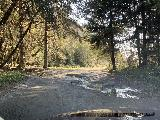 Drive_to_Trillium_Falls_001_iPhone_11212020 - Another look back at another eroded part of Davidson Road thanks to a third crossing of part of Squashan Creek