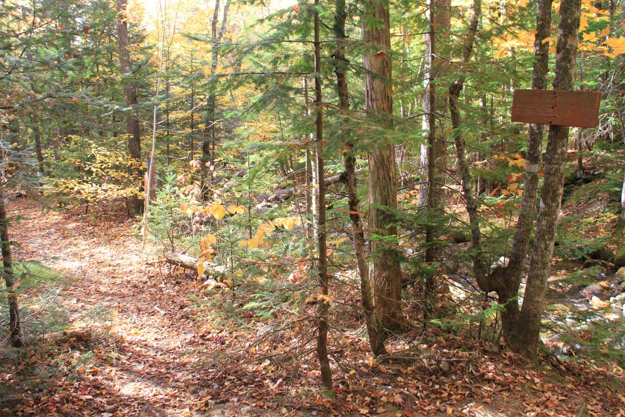 The trail junction between Dunn Falls and the Appalachian Trail