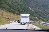 E39_Rv5_023_07202019 - Driving past some goats causing a traffic jam on the Rv5 en route to Fjaerland