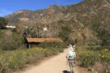 Eaton_Canyon_004_02042012 - Wildflowers flanking the trail in early February!?!?