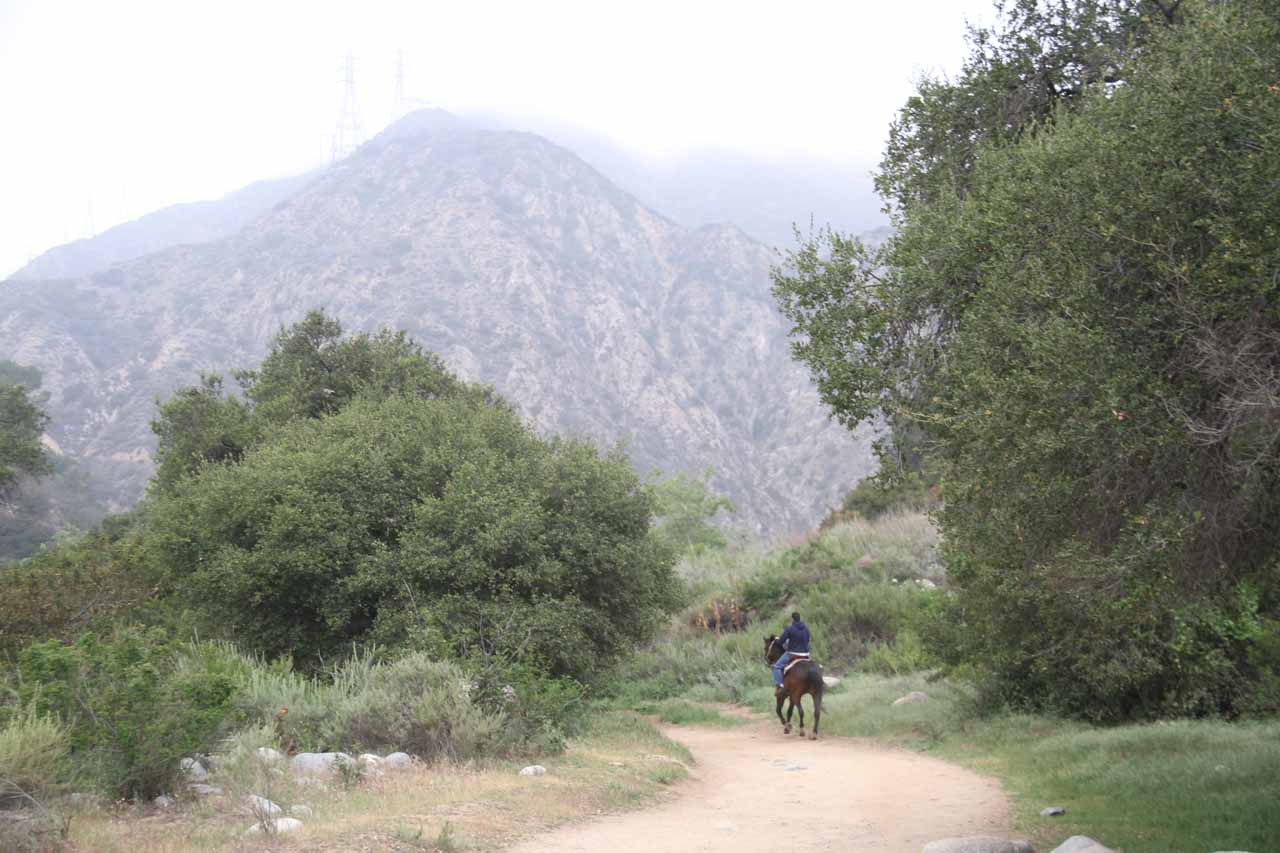 A guy on horseback riding on the Eaton Canyon Falls Trail