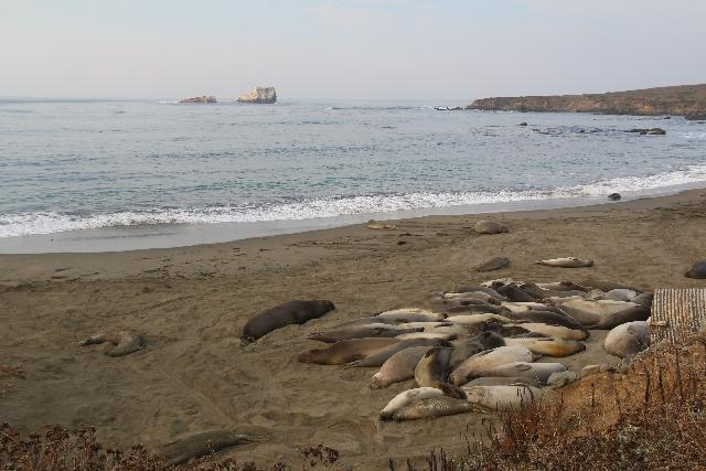 Elephant_Seal_Rookery_019_11182018 - The Elephant Seal Rookery just a few minutes south of Ragged Point was a real treat as we got to see the seals in their natural habitat along the Southern Big Sur Coastline