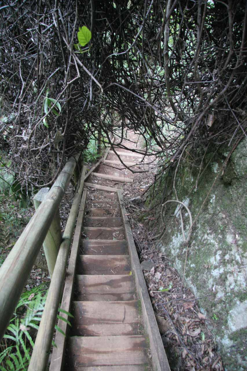 This was one of the overgrown parts we had to limbo beneath while on the steps to the base of Ellenborough Falls