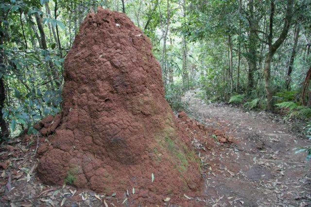 Ellenborough_Falls_030_05042008 - A big termite mound alongside the trail taking in the various views of Ellenborough Falls