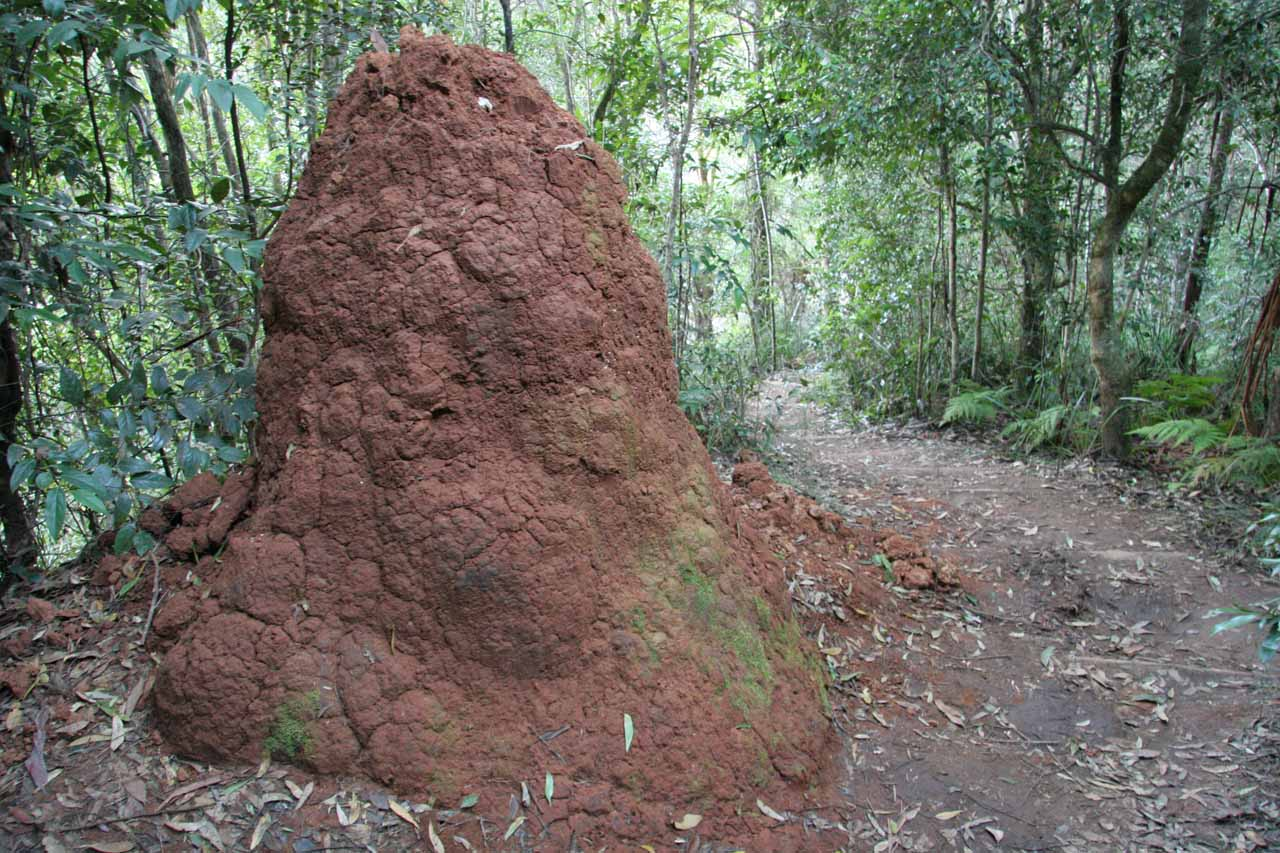 A large termite mound near Ellenborough Falls