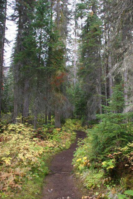Emerald_Lake_030_09172010 - The trail leading to Hamilton Falls
