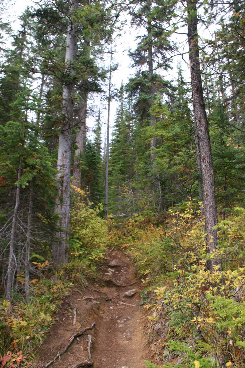 Continuing along the uphill narrow trail within forest
