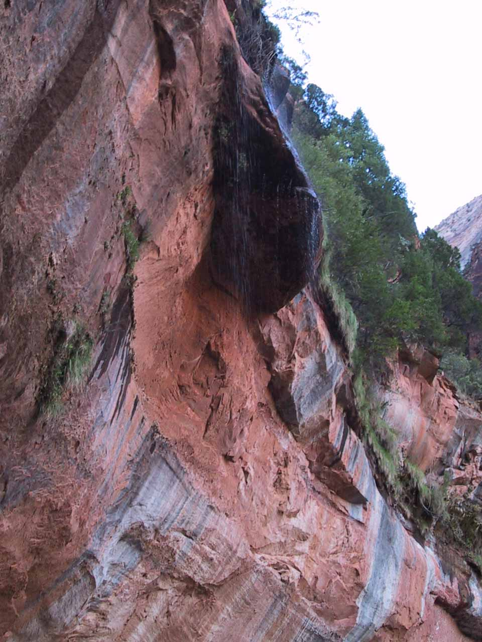 The waterfalls of the Lower Emerald Pools acted more like weeping rocks in June 2001