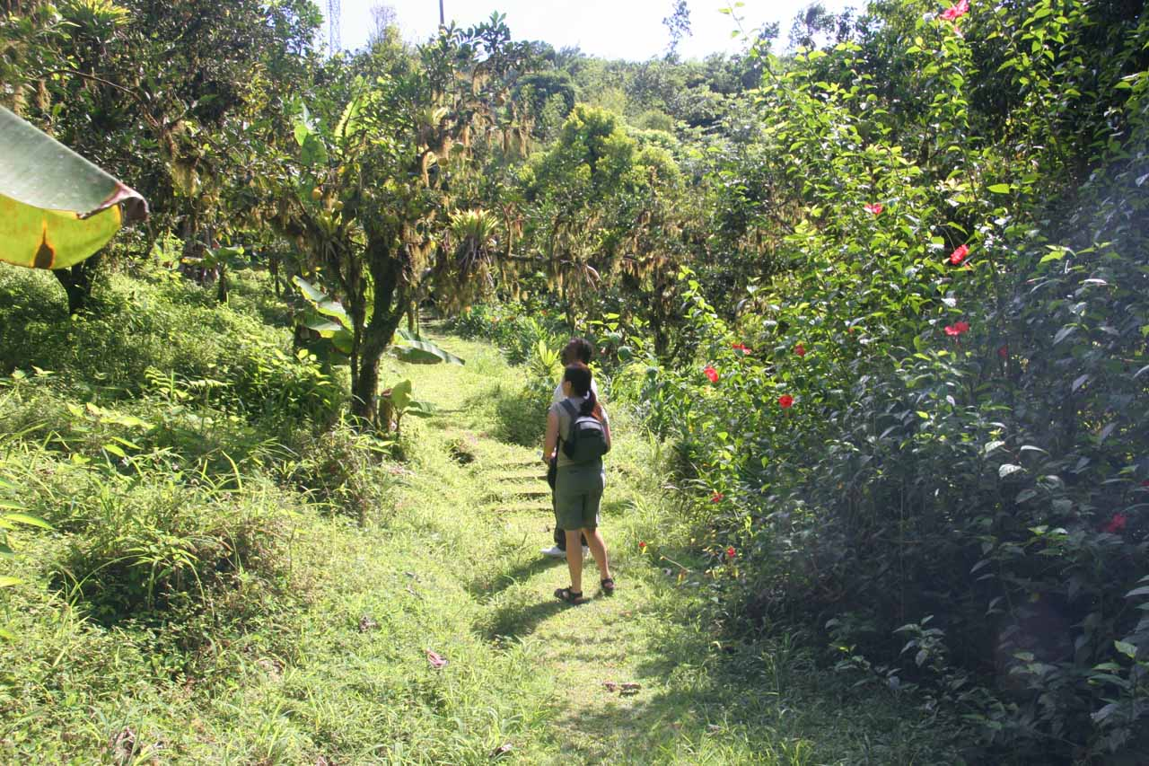 Going through an orchard