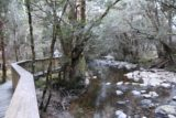 Enchanted_Walk_046_11302017 - Hiking alongside Pencil Pine Creek on the Enchanted Walk. That fellow further up the trail actually helped me to spot the platypus in the creek during my late November 2017 visit