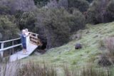 Enchanted_Walk_059_11302017 - Some other people happily taking photos of a wombat grazing next to the Pepper's Cradle Mountain Lodge